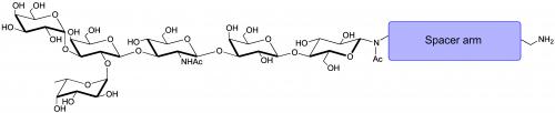 B血型抗原六糖1型-β-N-乙酰基-空间构型1-胺,Blood group B antigen hexaose type 1-β-NAc-spacer1-NH2, Galα1-3(Fucα1-2)Galβ1-3GlcNAc β1-3Galβ1-4Glcβ-NAc-sp1-NH2, 货号:GLY040-1-NAc-Sp1-NH2