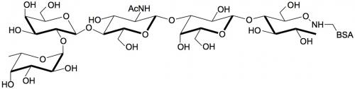 H血型抗原五糖2型-BSA , Blood group H antigen pentaose type 2 linked to BSA, Lacto-N-neofucopentaose I - BSA,  LnNFP I - BSA, Fucα1-2Galβ1-4GlcNAcβ1-3Galβ1-4Glc, 货号:GLY033-2-BSA