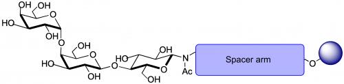 Gb三糖凝胶,Globotriaose GEL (Gb3/ Pk antigen) per ml of matrix, 货号:GLY120-GEL, Glybo三糖抗原和亲水性间隔臂(≈3nm)固化在非碳水化合物聚合物凝胶上