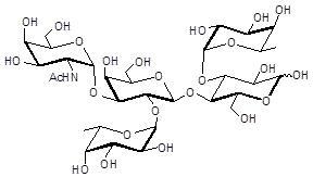 3-岩藻糖-A血型抗原四糖, 3-Fucosylated Blood group A tetraose, GalNAcα1-3(Fucα1-2)Galβ1-4(Fucα1-3)Glc 。C32H55NO24 。货号:GLY067 。