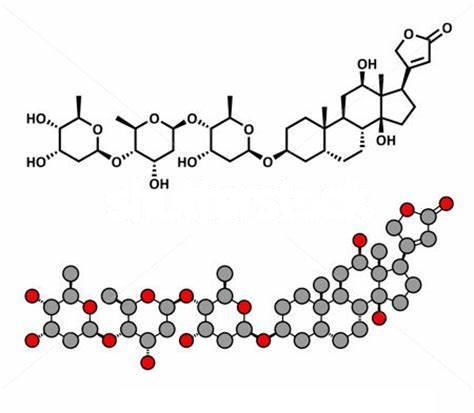 小鼠抗地高辛Digoxin单克隆抗体